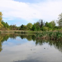 Meadowvale Conservation Area