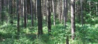Wooded Forest