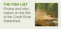 The Fish List Banner