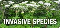 Invasive Species Banner