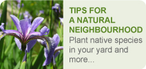 Tips for a Natural Neighbourhood Banner