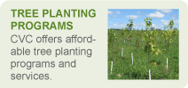 Tree Planting Programs Banner