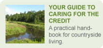 Your Guide to Caring for the Credit Banner