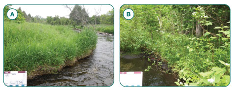 Figure 4. Riparian monitoring stations with a) the bank and floodplain dominated by Reed Canary Grass (Phalaris arundinacea) and b) abundant woody vegetation, several species of ferns, native vegetation, and low proportions of non-native and disturbance tolerant plants. Using the Riparian IBI these particular stations ranked as poor and good respectively.