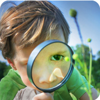 insect inspector - photo of child with magnifying glass