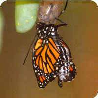 location location location - image of monarch butterfly
