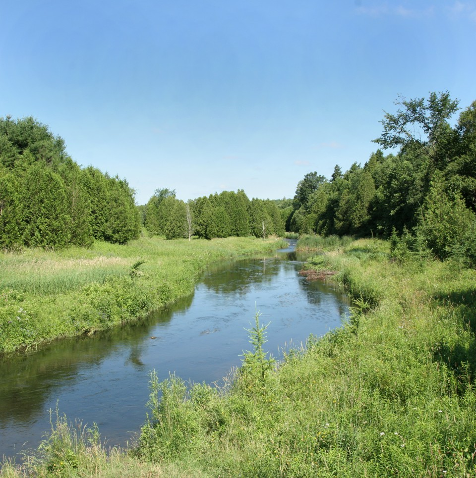 Vegetation in and along the Credit River