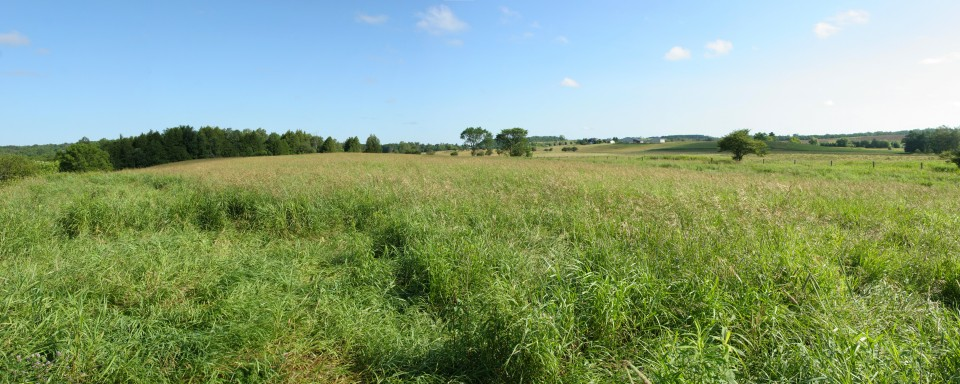 Old Field at Upper Credit Conservation Area
