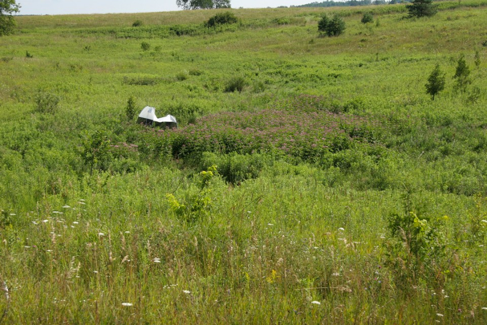 CVC's insect monitoring trap next to a patch of Joe-pye-weed.