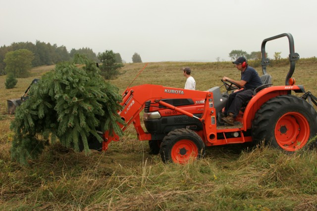 CVC foresters remove trees from the site.