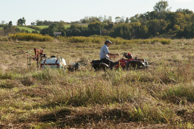 Prepping the site by removing foreign invasive plants.