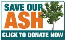 Save Our Ash - Donate Now