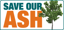 Save Our Ash