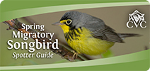 Spring Migratory Songbird Spotter Guide webpage