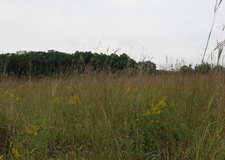 Tallgrass Prairie Restoration at Bronte Creek Provincial Park