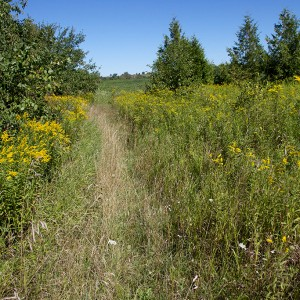 A trail leading up to the grassland restoration site.