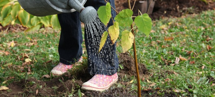 Caring for Your Green Yard