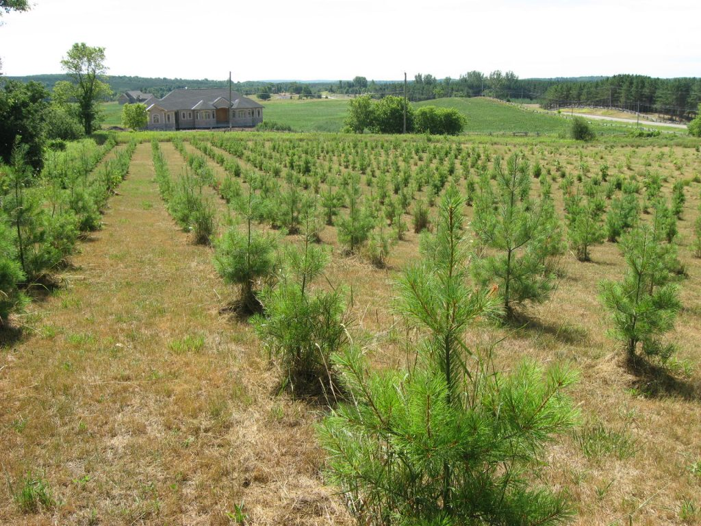 It Takes a Village: Growing Forests in the Credit River Watershed