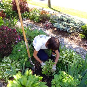 Spring Gardening in Your Yard