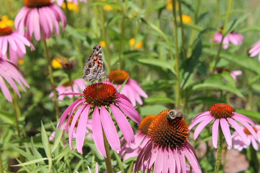 How to create a pollinator habitat in your backyard