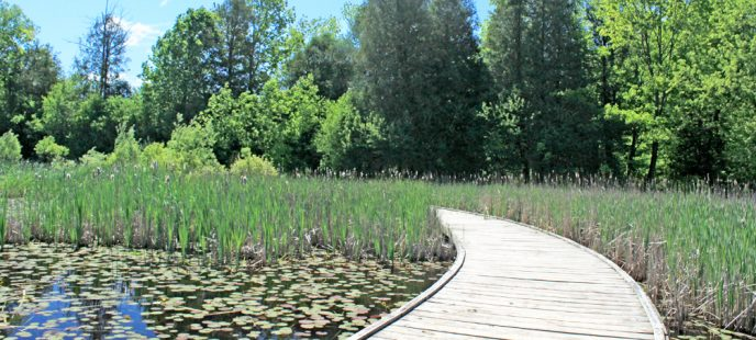 Forest and Wetland Health Workshop