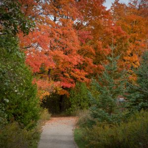 Fall Colours and Much More at Terra Cotta's Fall Festival
