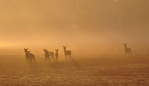 A family of White-tailed Deer getting an early start to the day. Photo credit: Jon Clayton