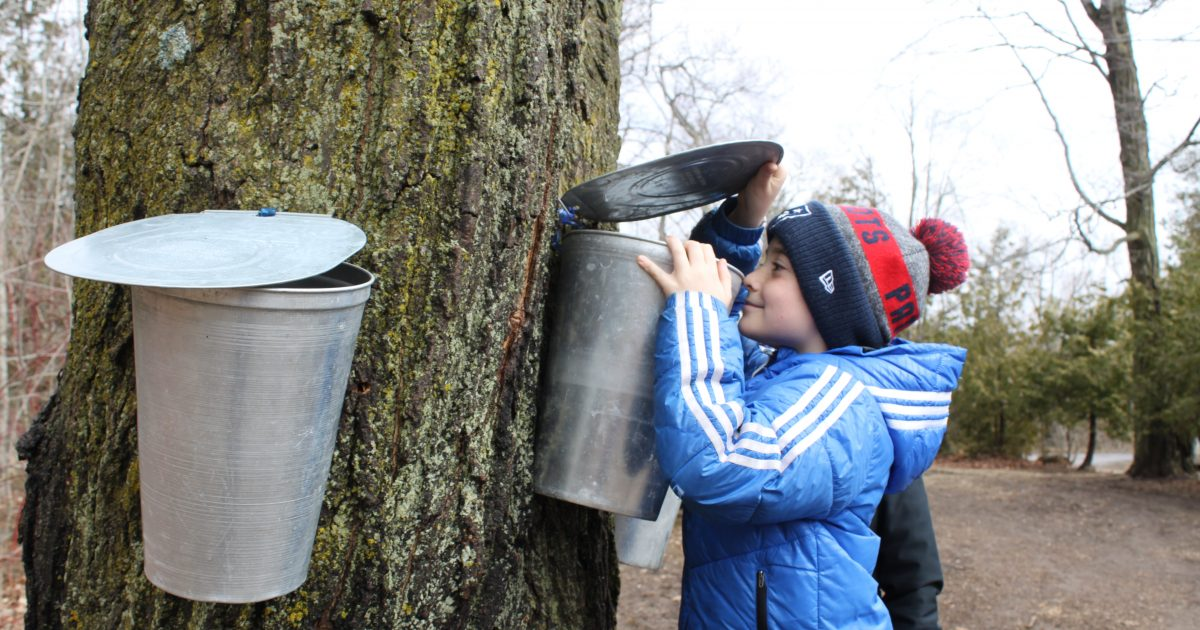 Kid looking into to maple syrup bucket