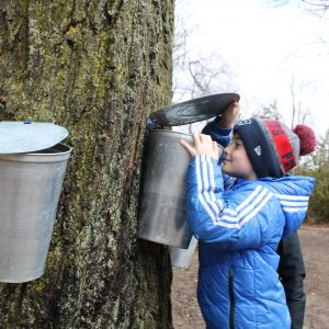 Tap into Spring with Maple Syrup Fest