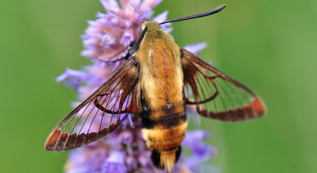 Six pollinators that rarely make the bee-list