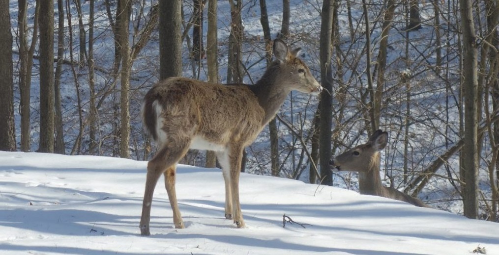 How Local Animals Survive in Winter