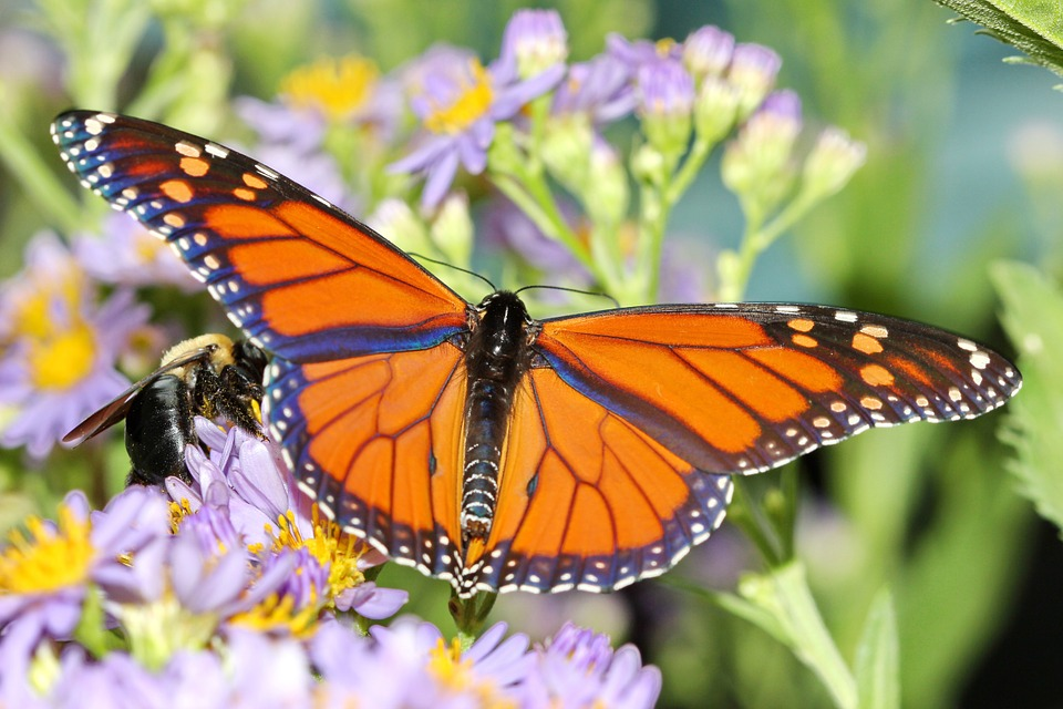 Making your Garden the Talk of the Bug World