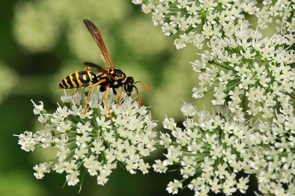 Who's Who in the World of Wasps?