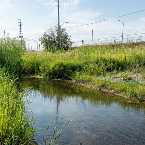 Green Infrastructure is Making an Impact in the Region of Peel