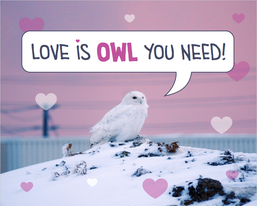 Owl on top of a snow mound with a speech bubble that says: love is owl you need!