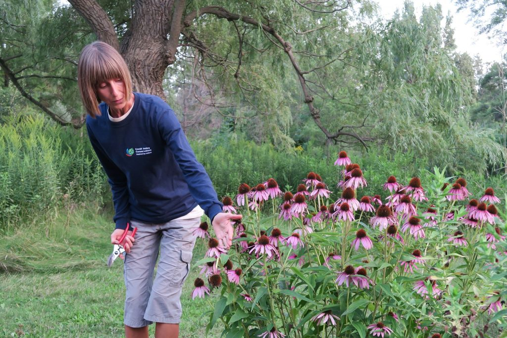 Meet the Expert – Caring for Your Green Yard