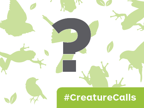 Creature Calls – Nature's Soundtrack