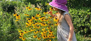 Little girl smelling black-eyed susans