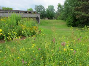 Berms planted with native wildflowers.