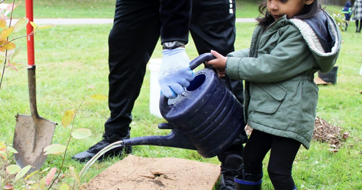 Young girl with her father planting and watering a tree