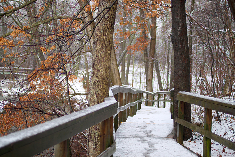 A light dusting of snow along a boardwalk winding through the trees.