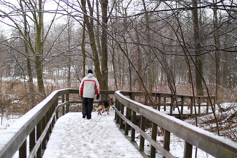 A person walks along the boardwalk with their dog in winter.