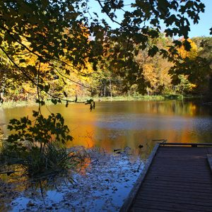 A wooden boardwalk leads to a lookout over a pond in fall, with colourful trees all around.
