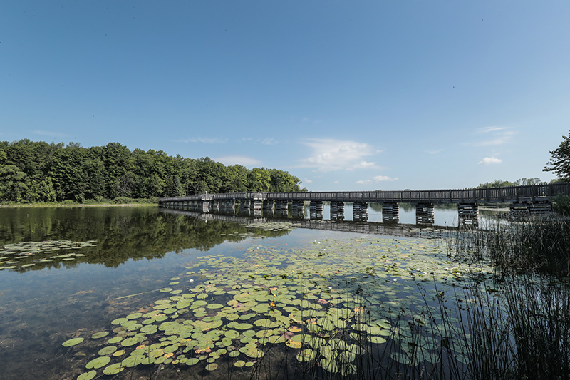 View of a long walking bridge across the water, with lily pads in the foreground and trees on the opposite site of the water.