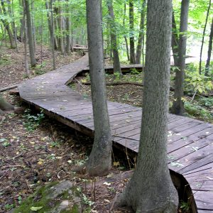 A wooden boardwalk through the trees in summer.