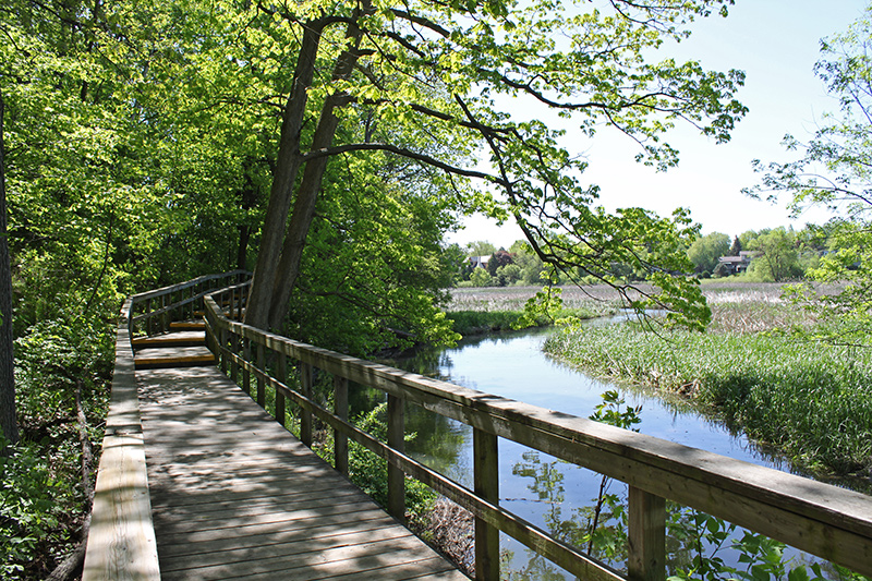 A wooden boardwalk through the trees, opens a view to the marsh waters.