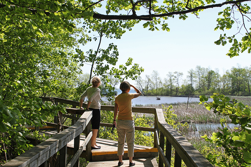 Two pedestrians stop along a wooden boardwalk to look out across the marsh.