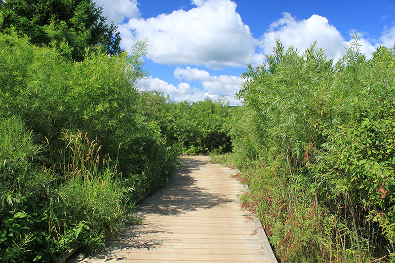 A boardwalk section along the path, surrounded by tall grasses and bushes.