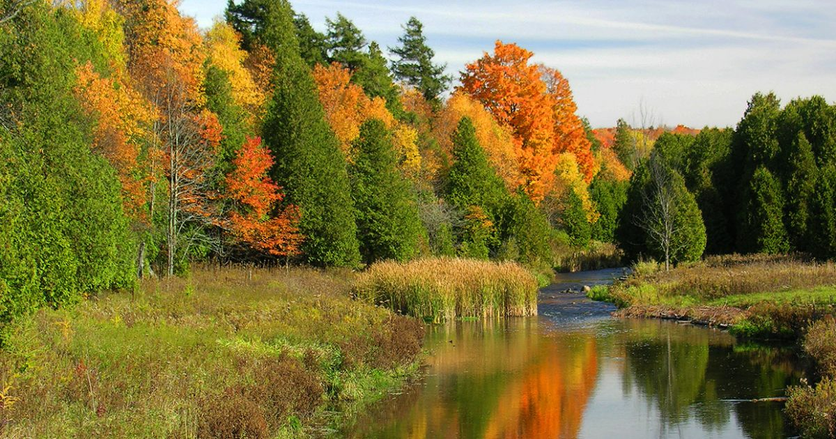 Upper Credit River surrounded by trees with fall colours
