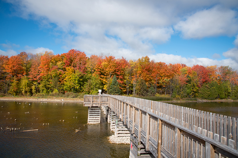 A long foot bridge passes over the water to a forest on the other side, brightly coloured in fall.